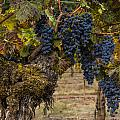 Harvest Time by Lee Jorgensen