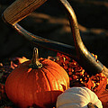 Harvesting For Thanksgiving by Sandra Cunningham