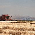 Harvesting Grain by Cindy Singleton
