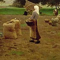 Harvesting Potatoes Oil On Canvas by Henri Lerolle