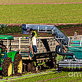 Harvesting Spinach by Robert Bales