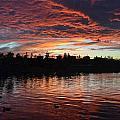 Harveston Sunset by Christine Owens