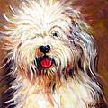 Harvey The Sheepdog by Rebecca Korpita