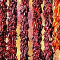 Hatch Red Chili Ristras by Barbara Chichester