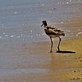 Hatteras Island Bird 8/24 by Mark Lemmon