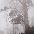 Haunted Forest. Nuwara Eliya. Sri Lanka by Jenny Rainbow