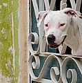 Havana Watchdog by Rob Huntley