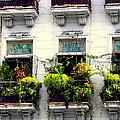 Havana Windows by Karen Wiles