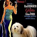 Havanese Art - Gilda Movie Poster by Sandra Sij
