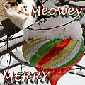 Have A Meowey Merry Christmas by Phyllis Kaltenbach