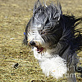 Having A Bad Hair Day by Dianne Phelps