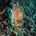 Havis by Chris Lever