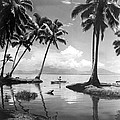 Hawaii Tropical Scene by Underwood Archives