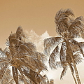 Hawaiian Breeze by Athala Carole Bruckner