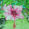 Hawaiian Healing by Anna M Sullivan