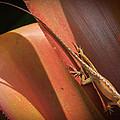 Hawaiian Lizard by Inge Johnsson