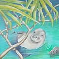 Hawaiian Monk Seal  by Golanv  Waya