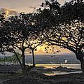 Hawaiian Nights by Daniel Hagerman