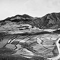 Hawaiian Pineapple Plantation by Underwood Archives