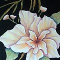 Hawaiian Pua by Pamela Allegretto
