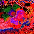 Hawaiian Sunrise by John Le Brasseur