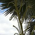 Hawaiiana 18 by D Preble