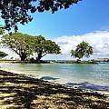 Hawaiian Landscape 1 by D Preble