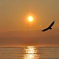 Hawk At Sunrise by Bill Cannon