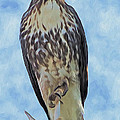 Hawk By Frank Lee Hawkins by Eastern Sierra Gallery