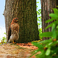 Hawk Eyes by Tap On Photo