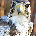 Hawk Eyes by Tara Ellis