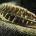 Hawk Feather  by Rebecca Sherman