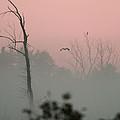 Hawk In Morning Fog by Crystal Heitzman Renskers