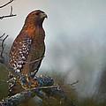 Hawk In The Mist by John  Nickerson