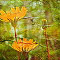 Hawkweed Wildflower by Mother Nature