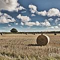 Hay Bales 1 by Steve Purnell
