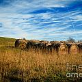Hay Bales And Contrails by Amy Cicconi