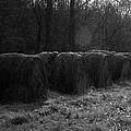 Hay Bales Bw by Teresa Mucha