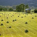 Hay Bales by Ed  Cooper Photography