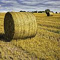 Hay Bales by Fran Gallogly