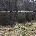 Hay Bales by Teresa Mucha