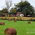 Hay From North Carolina by Lydia Holly