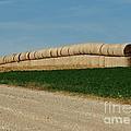 Hay Harvest by Joy Bradley