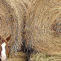 Hay Horse by Darlene Grubbs