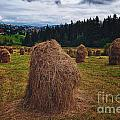 Hay In Stacks In Tatra Mountains Poland by Frank Bach