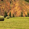 Hay Rolls  by Theresa Tahara