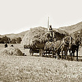 Horse-drawn Hay Wagon Carmel Valley California Circa 1905 by California Views Archives Mr Pat Hathaway Archives