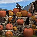 Haycats N' Pumpkins by Jennifer Schwab