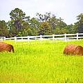 Hayrolls And Fences by Tara Potts