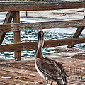 hd 392 hdr - Pelican On The Pier by Chris Berry